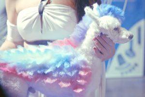 19 BAFICI - El cielo de los animales